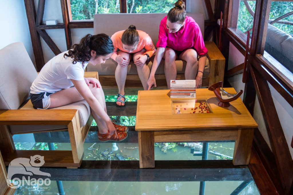 Glass floors at the Napo Wildlife Center