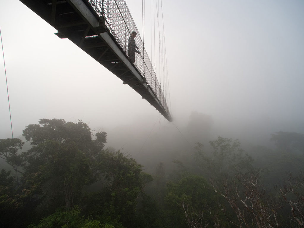 Canopy Walk when you visit the Amazon at Sacha Lodge