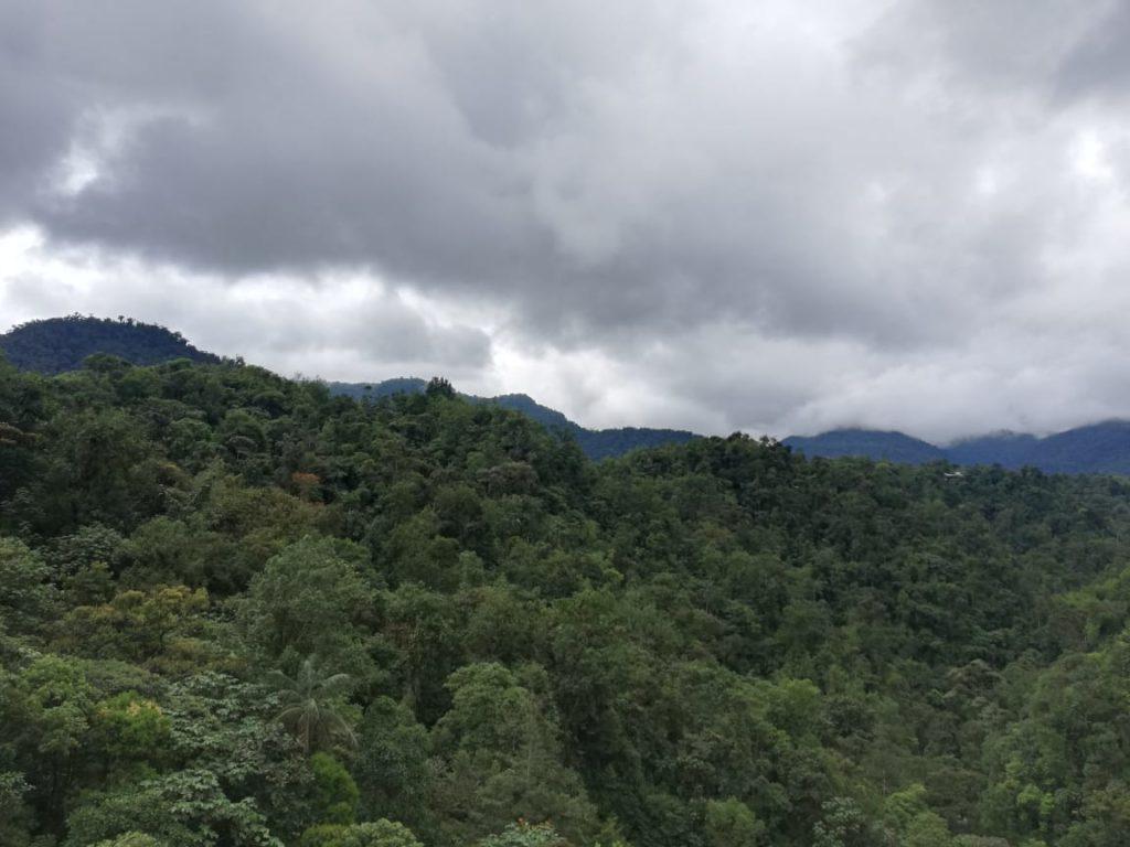 Mindo Landscape