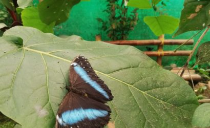 Visit the butterfly farm in Mindo