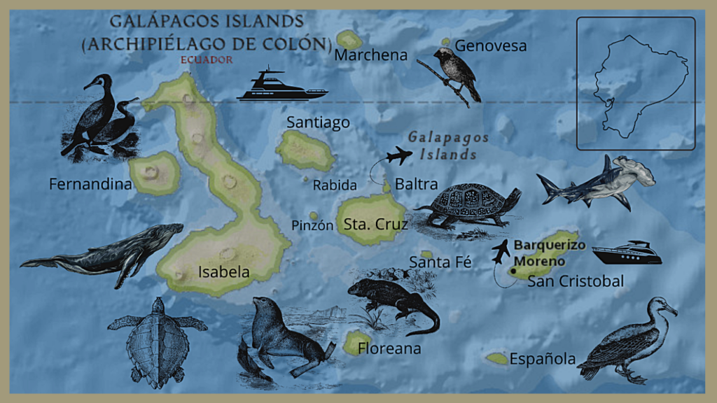 Galapagos Tours and Vacations