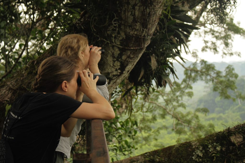 Best birdwatching in Yasuni Ecuador