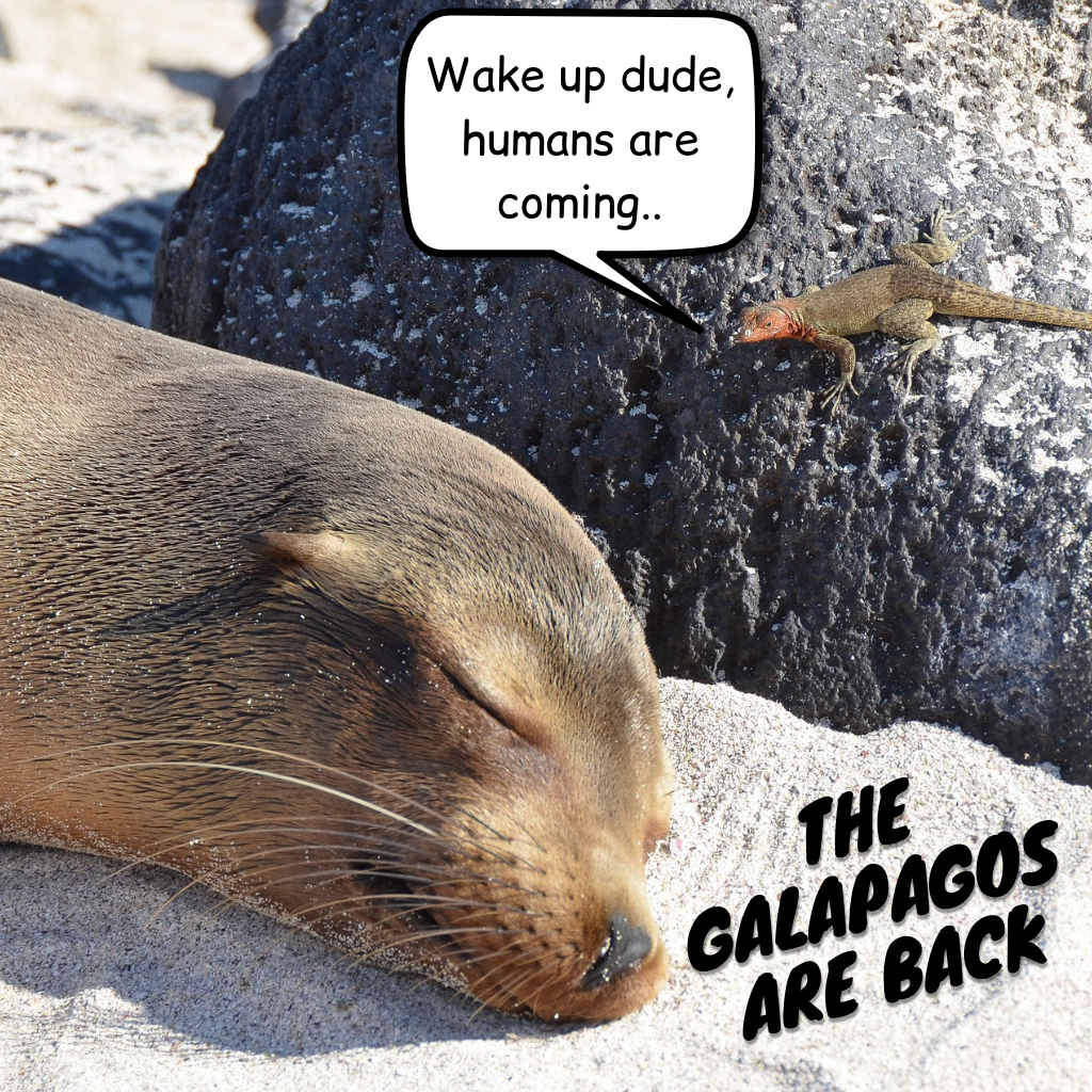 The Galapagos are back